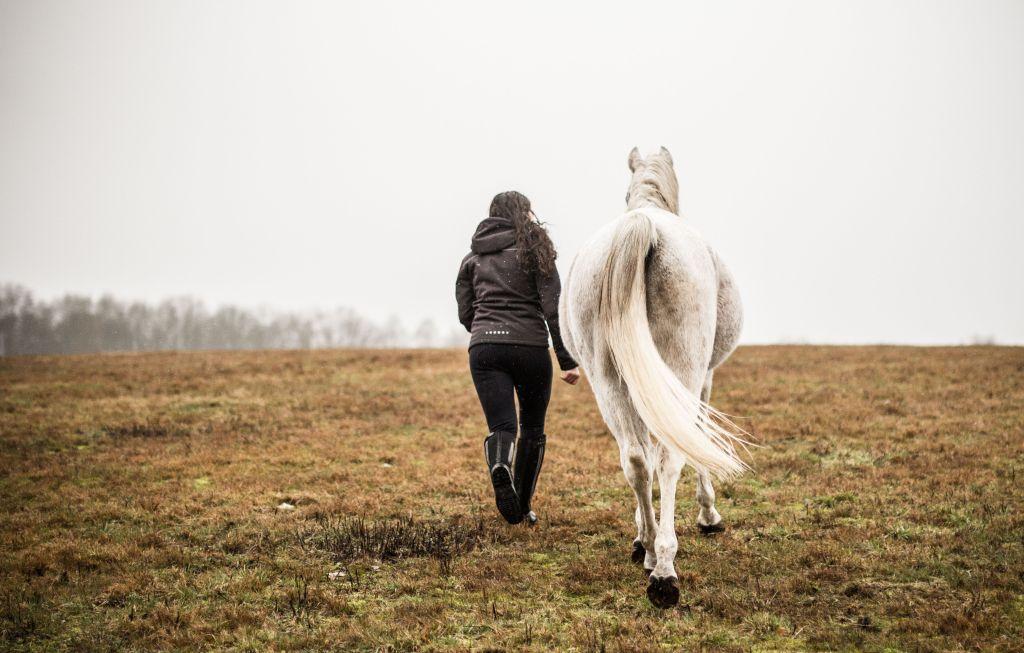 Schöne Zeit mit dem Pferd