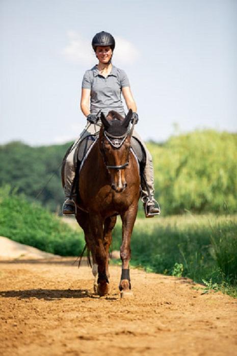 Ein Pferd, das in korrekter Stellung geritten wird.