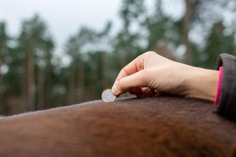Akku beim Pferd leer?