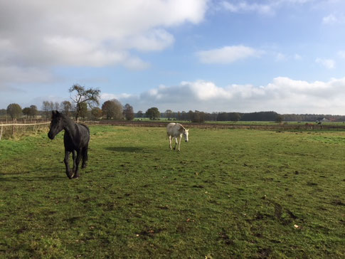 Jedes Pferd ist individuell.