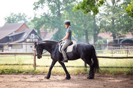 Pferd in korrekter Dehnungshaltung.