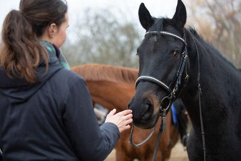 Kommunikation mit dem Pferd.