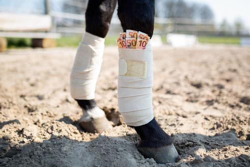 Pferde sind eine kostspielige Anschaffung.