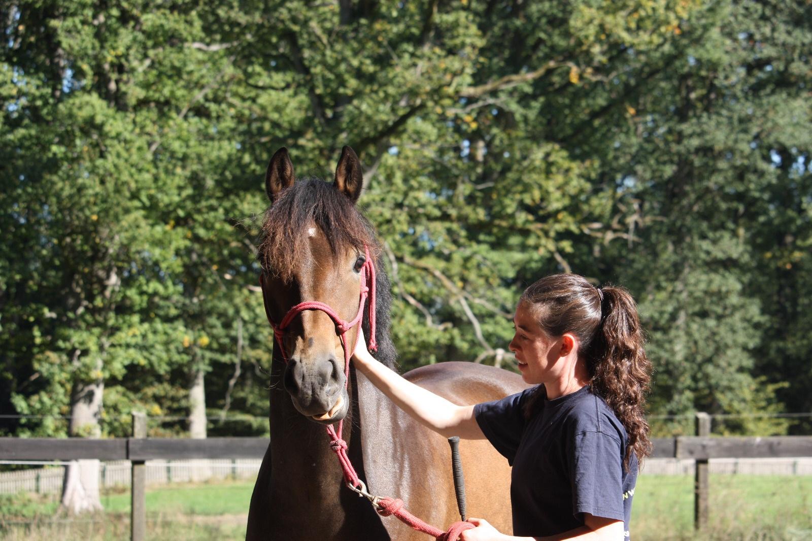 Gutes Miteinander zwischen Pferd und Reiter