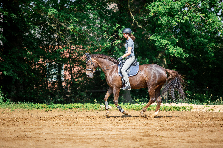 Ein korrekt galopperiendes Pferd