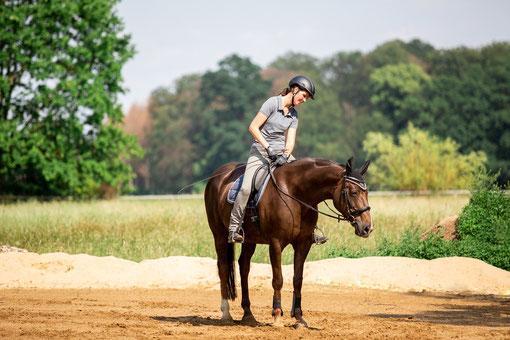 Pferde mit Pausen richtig belohnen.