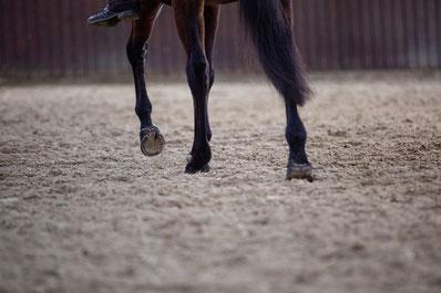 Pferd in der Reithalle
