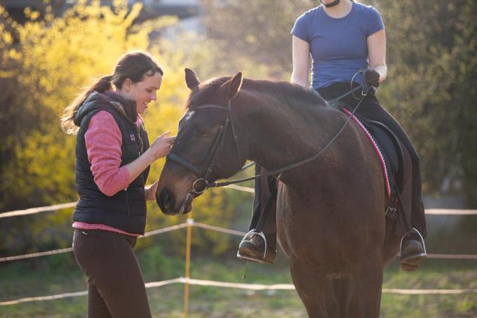Loben des Pferdes in den Trainingspausen