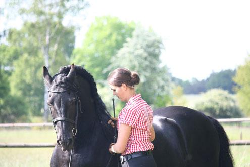 Pferd loben bei Bodenarbeit