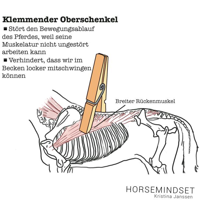Wie ein klemmendere Oberschenkel des Reiters die Rückenmuskulatur des Pferdes einschränkt.