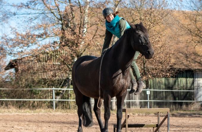 Erstes Aufsteigen auf ein junges Pferd