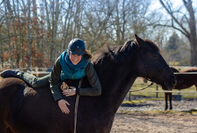 Ein junges Pferd erfolgreich anreiten